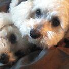 Two Sleepy Heads! by Ann Marie Hoff