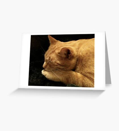 Spike Kitty in Repose Greeting Card