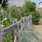 The Old Post and Rail by DEB CAMERON
