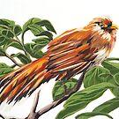 Squirrel Cuckoo by roxygen