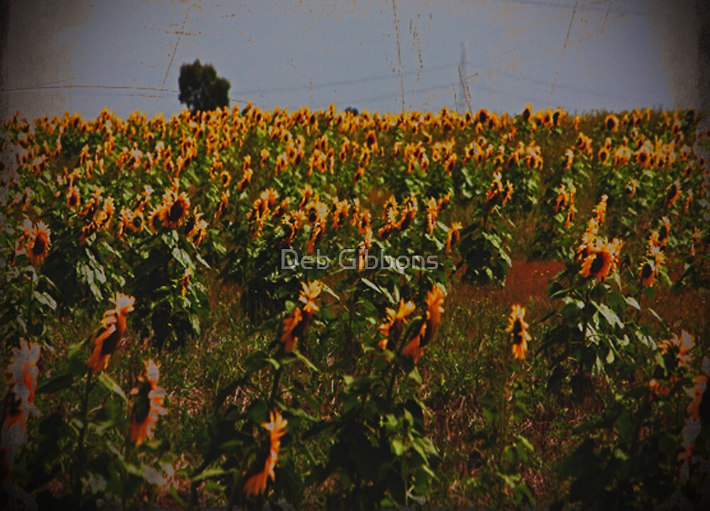 Field of Sunflowers by Deb Gibbons