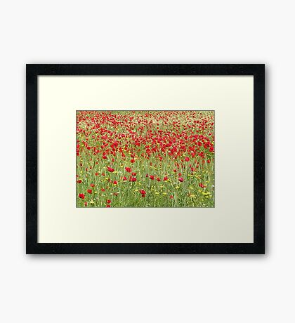 Meadow With Beautiful Bright Red Poppy Flowers Framed Print