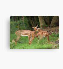 Bambi and Friends Canvas Print