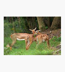 Bambi and Friends Photographic Print