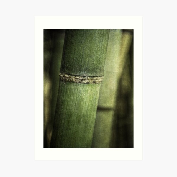 Mysteries of the Bamboo Forest Art Print
