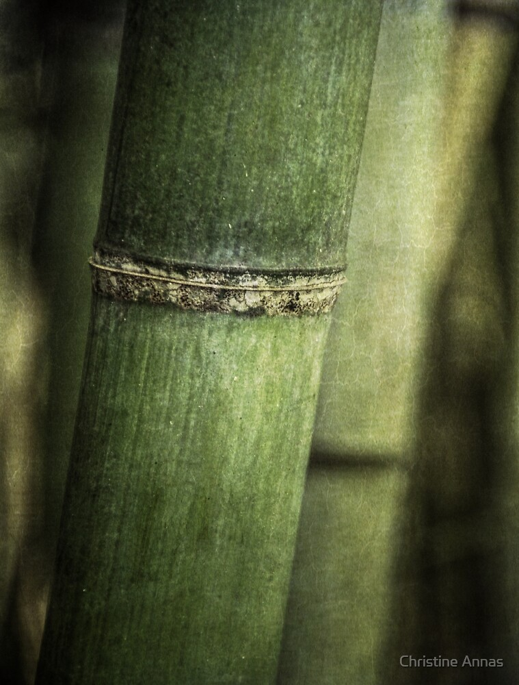 Mysteries of the Bamboo Forest by Christine Annas