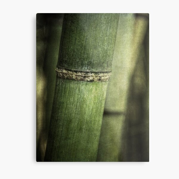 Mysteries of the Bamboo Forest Metal Print