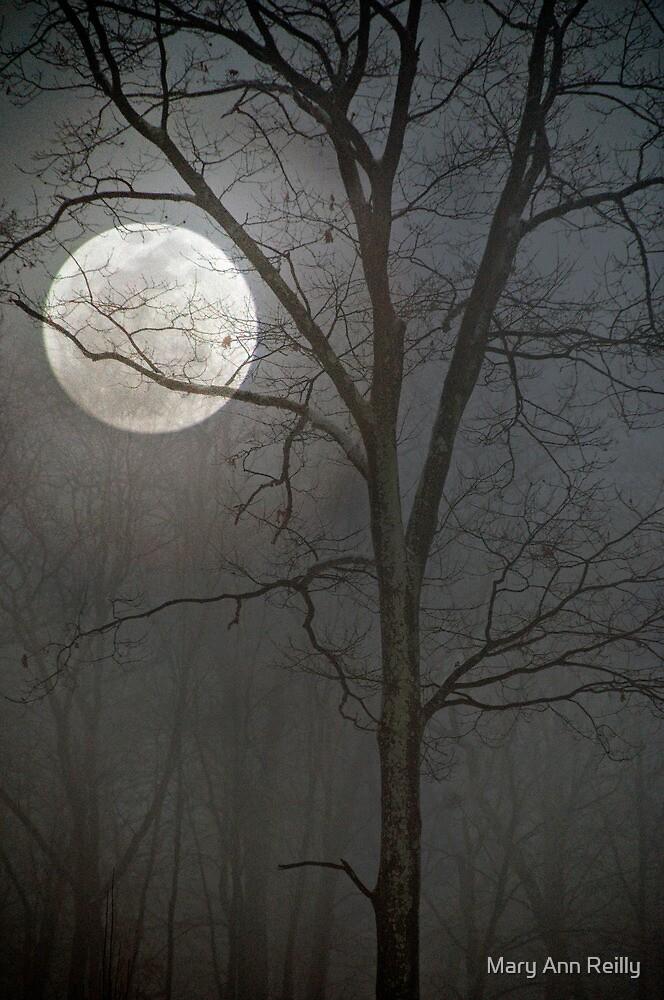 Winter Fog by Mary Ann Reilly