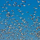 Birds of a Feather Flock Together by Barb White