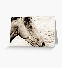 Equus III Greeting Card