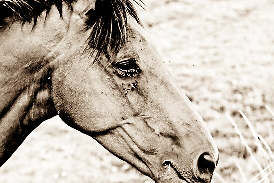 Equus III by Richard Pitman