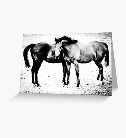 Equus II Greeting Card
