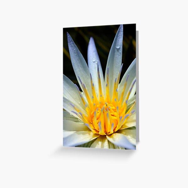 Water Lily flower, (Adelaide Botanic Gardens) Greeting Card