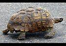 Tortoise strolling along by Elizabeth Kendall