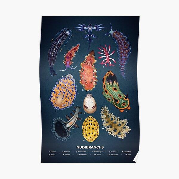 Nudibranchs Plate Poster