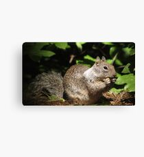 Cute Squirrel Photo and Cell Phone Case Canvas Print