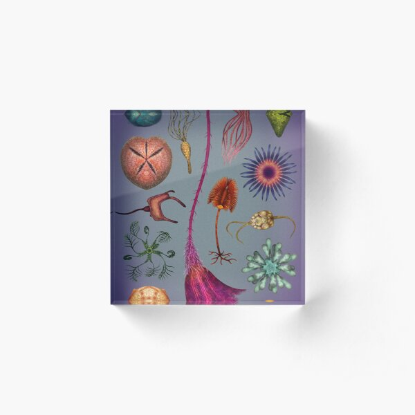 Echinoderms Plate Acrylic Block