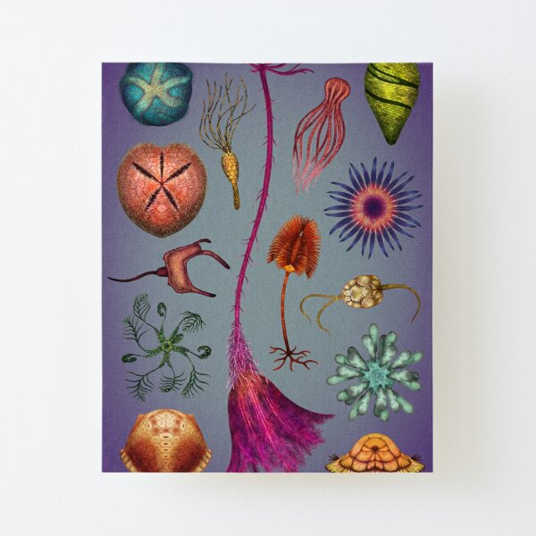 Echinoderms Plate Canvas Mounted Print