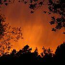 Mountain Lights - Leura Sunrise by Erland Howden