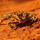 Little Thorny Devil by Wayne England