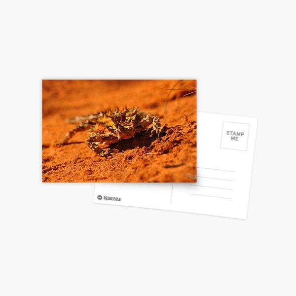 Little Thorny Devil Postcard