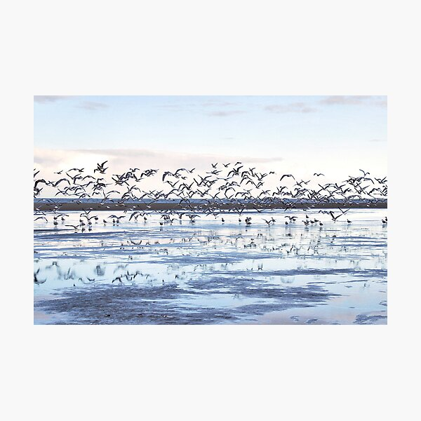 Seagulls on the beach Photographic Print
