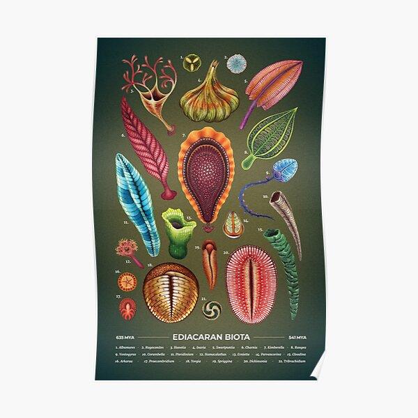 Ediacaran Plate Poster