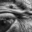 "the photographer's eye by Antonello Incagnone ""incant"""