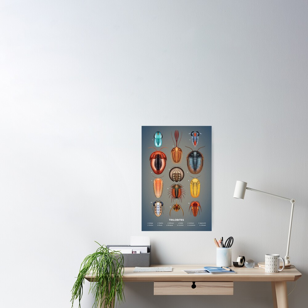 Trilobites Plate Poster