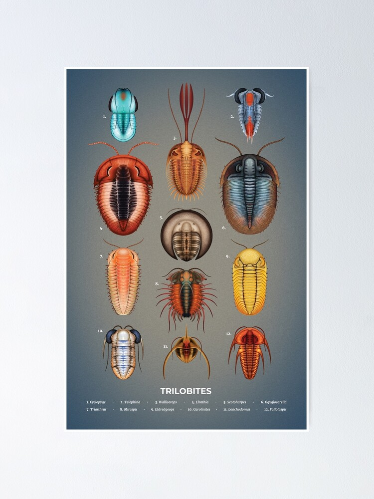 Alternate view of Trilobites Plate Poster