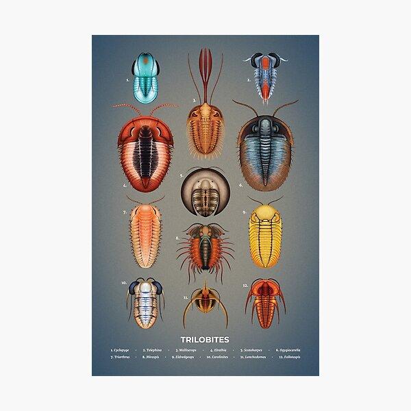 Trilobites Plate Photographic Print