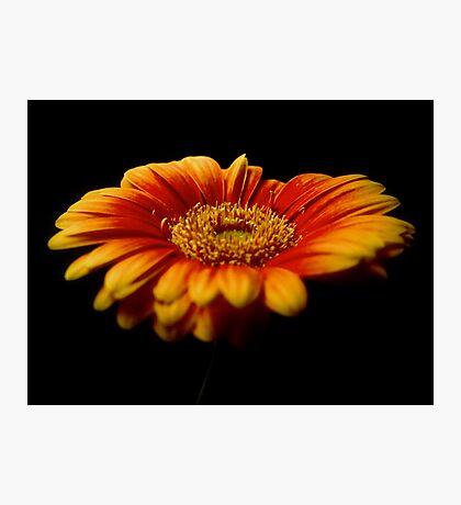 Floral Flames Photographic Print