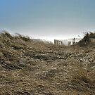 Winter Beach Grass - Series 2011 by Jack McCabe