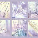Winter Finale by aMOONy