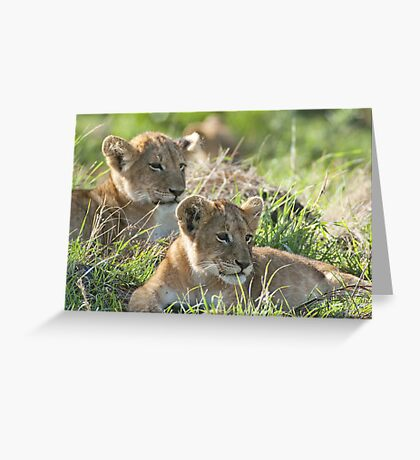 Two attentive lion cubs Greeting Card