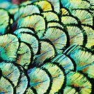 Peacock Feathers by Guy Carpenter