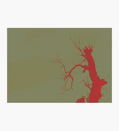 02-21-2011 Tree of Blood Photographic Print