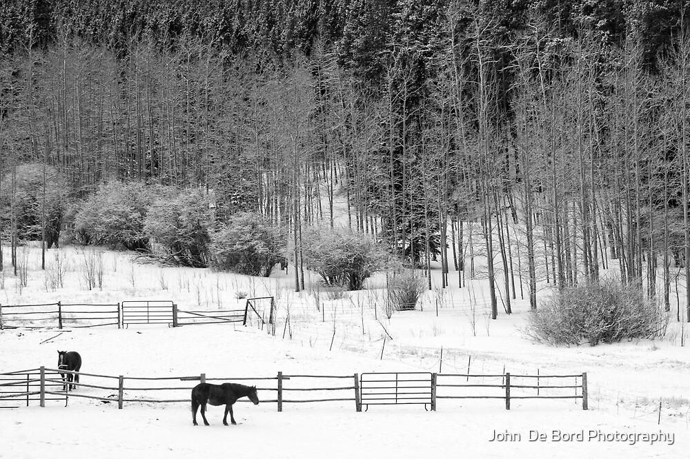 Winter Horses by John  De Bord Photography