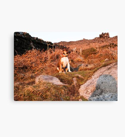 Megan on Curbar Edge Derbyshire at Sunset Canvas Print