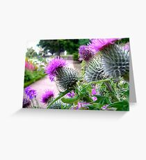 Thistles at Dirleton Castle Greeting Card