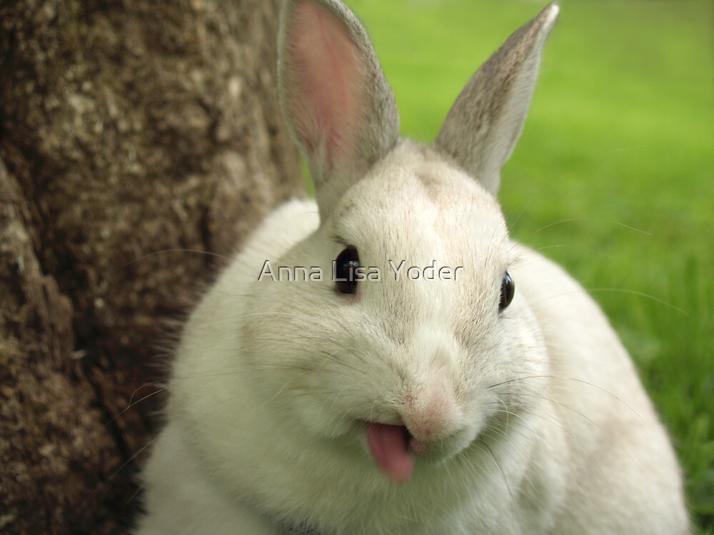 Bugsy Sticking out his Tongue by Anna Lisa Yoder