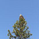 Alaskan Eagle Eyes by Beth M. Hughes