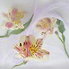 Spring Lilies by Sandra Guzman