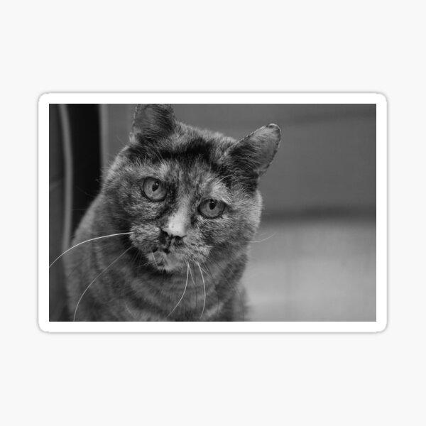 Tortoiseshell Cat in Black and White Sticker