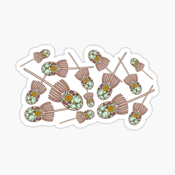 Choanoflagellate Anatomy Print  Sticker