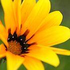Yellow flower by pulen