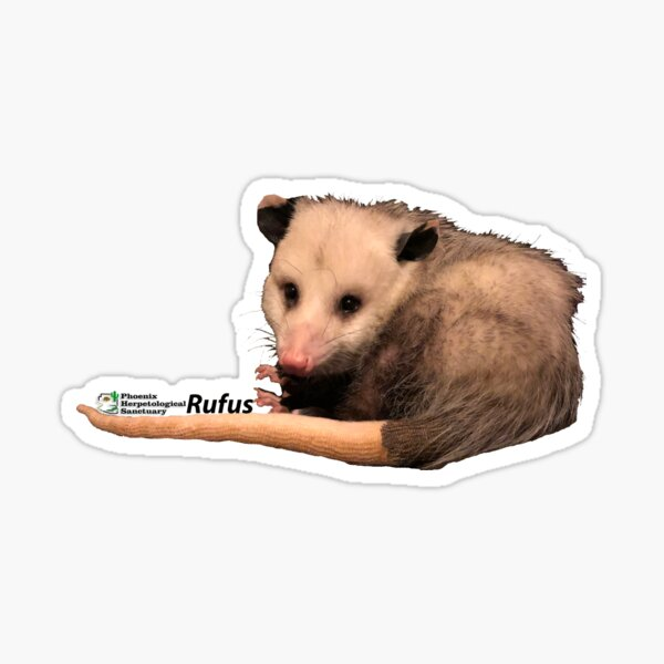 Rufus the Opossum Sticker