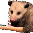 Rufus the Opossum by PhoenixHerp