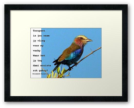 Kyk na die voëls / Look at the birds by Elizabeth Kendall