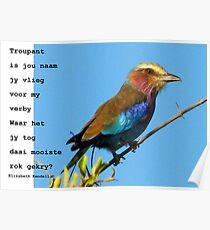 Kyk na die voëls / Look at the birds Poster